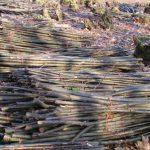 Roundwood Poles